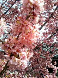 image/2009-03-20T14:06:151